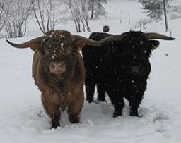 Havupuro Highland